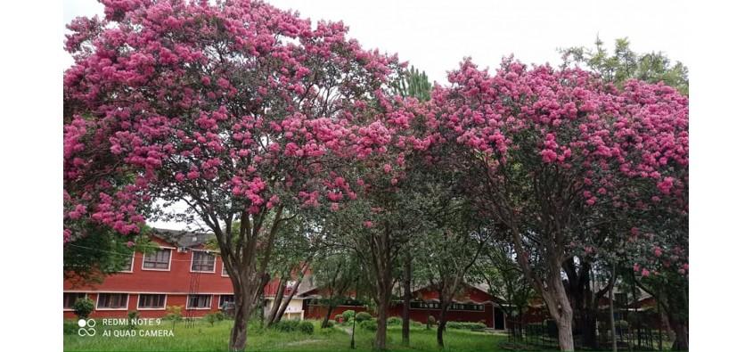 Central Department of Education, Garden